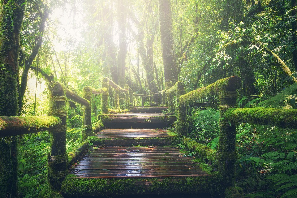 Путь к себе: 3 простых шага — Дарья Милай для BusinessLady-Life.ru