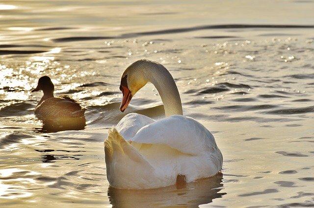 символ любви и верности фото